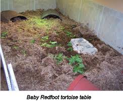 Tortoise Bedding Creating A Home For Your Redfoot Tortoise