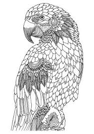 drawing wise birds coloring free printable coloring