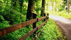 close up fence fence fencing leaves leaves leaves green nature