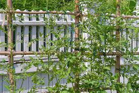 Trellis Landscaping Garden Design Garden Design With Honeydew Melon Vines On A