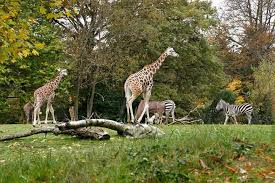 Zoo Lights Woodland Park Woodland Park Zoo Discount Admission Tickets Seattle Citypass