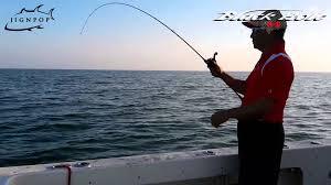 scup fishing in cape cod may 2015 black hole usa cape cod tai