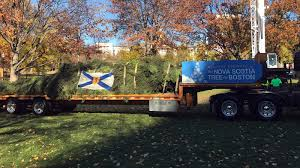 boston s tree tradition rooted in a canadian thank you npr