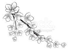 cherry blossom tattoo outline by xxxdanixxxevilxxx on deviantart