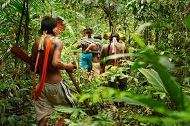 native plants in tropical rainforest rain forest warriors how indigenous tribes protect the amazon