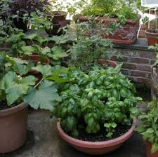 Urban Veggie Garden - vegetable garden growing veggies and herb in pots png
