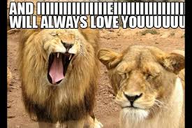 I Love You Meme For Her - i love you memes for her funny image memes at relatably com