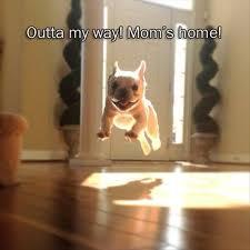 Hyper Dog Meme - tips ways to calm a hyper dog p pawliscious the ultimate pet blog