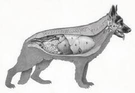 Dog Body Parts Anatomy New Page 1