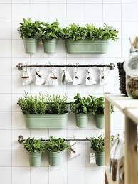 les herbes aromatiques en cuisine faire pousser des herbes aromatiques idées décoration intérieure