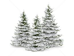 christmas tree with snow christmas trees with snow stock photo jezper 1797976 stockfresh