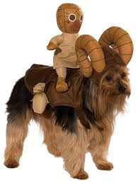 Small Dog Halloween Costumes Ideas 87 Halloween Dog Costumes Images Animals