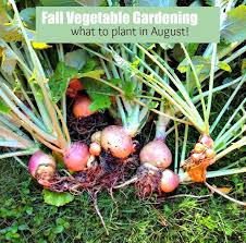 Fall Vegetable Garden Ideas by Fall Vegetable Gardening 5 Things To Plant Now