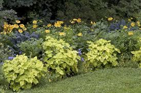 Backyard Flower Garden Ideas by Low Maintenance Garden Tips Ideas And Plants For Easy Gardening