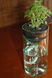 Self Watering Indoor Planters by 51 Best Flowers Growing At Bayou Blooms Images On Pinterest