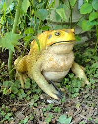 cute cane toad figure statue for garden home decor or zoo frog