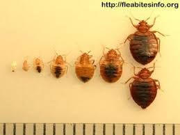 How Long Do Bed Bug Bites Take To Show Up 48 Best Get Rid Of Bedbug Bites Images On Pinterest Bed Bugs