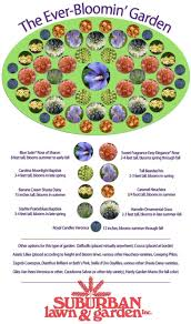 Beginner Vegetable Garden Layout by Best 20 Flower Garden Layouts Ideas On Pinterest Spring Hill