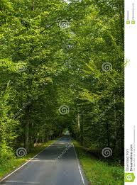 beautiful road in the middle of green trees stock photo image