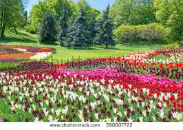 holland flowers garden stock images royalty free images u0026 vectors