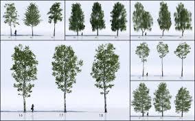 18 free 3d trees birch ronen bekerman 3d architectural