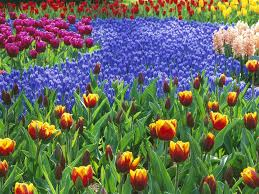 17 best 1000 ideas about flower gardening on pinterest flowers