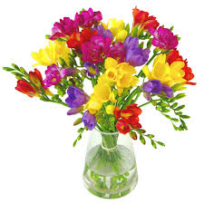 freesia flower freesia flower capnhat24h info capnhat24h info