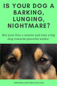 Dog Barking Meme - barking lunging at people or other dogs get help now for your