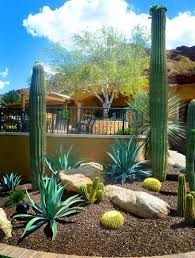 462 best desert landscaping ideas images on pinterest