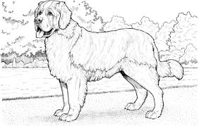 saint bernard coloring free printable coloring pages