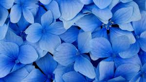 free flower wallpaper 6792184