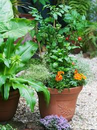 plants and flowers for companion planting plants for container