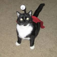 Funny Halloween Costumes Cats Check Hilarious Halloween Costumes Cat