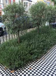 Fake Bushes Olive Trees Lavender Bushes Black U0026 White Tiles And Metal Rails