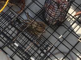 Cool Jesus Meme - jesus crab caught off whidbey island resembles cool jesus meme