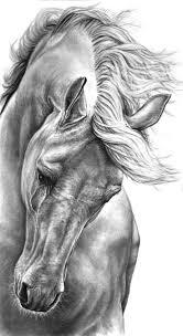 Drawing by Resultado De Imagen Para Como Dibujar Un Caballo Realista Arte