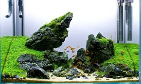 2ft seiryu scape pride rock aquascaping inspiration
