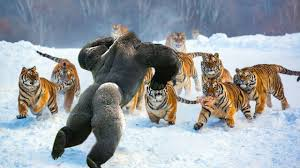 Wild Animals images Wild discovery animals most amazing moments of wild animal jpg