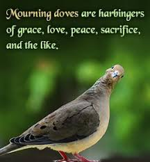 87 best mourning dove images on mourning dove birds and