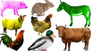 farm animals sounds for children learning videos farm animals