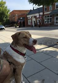 Tn Blueprints by 10 Unique Pet Friendly Day Trips In Tennessee Tripswithpets Com