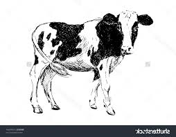 best free stock vector hand drawing cow illustration pictures