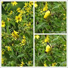 bird attracting native plants gardening for the birds gardening know how u0027s blog