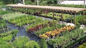 florida nursery mart plants sod and everything landscaping