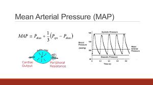 Blood Pressure Map Arterial Blood Pressure Anatomy U0026 Physiology Ppt Download