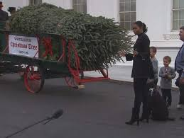 accepts white house tree from wisconsin