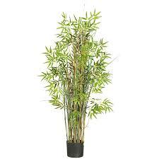 bamboo plants solidaria garden