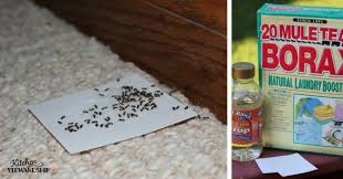 how to get rid of ants in your house natural u0026 safe diy ant killer