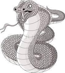 cobra tattoo stock vector colourbox