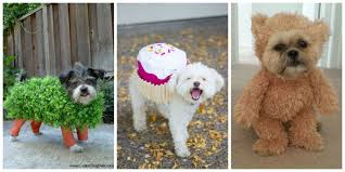 25 cute dog and cat halloween costumes best ideas for pet